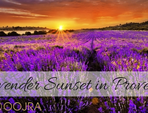 Lavender Sunset in Provence France