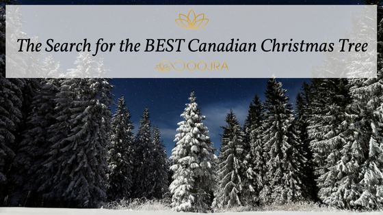 The Search for the BEST Canadian Christmas Tree